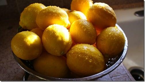 Lemon tree, very pretty...